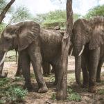野生動物の宝庫タンザニアでのサファリ2泊3日。  タランギレ国立公園・マニャラ湖・ンゴロンゴロ