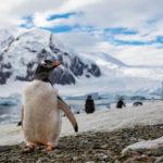 【南極旅章No.2】70万が吹っ飛んだ感動の瞬間。5m先に突如現れた巨大クジラ&南極ペンギンパラダイス